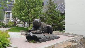 juneau-bear