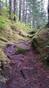 mossy-trail