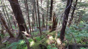 mt roberts trail 3