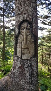 mt roberts tree 1