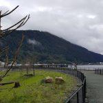 Juneau Seawalk